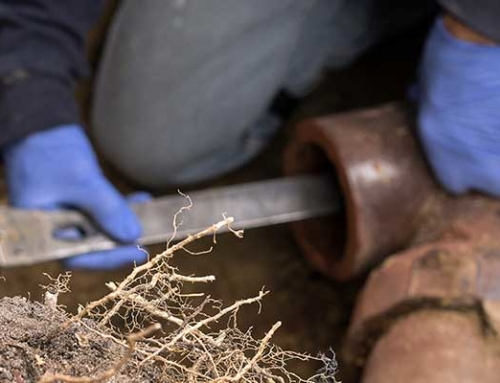 What Happens When Tree Roots Get Inside Sewer Lines, and What Can You Do About It?